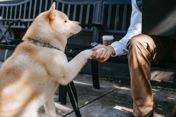 Best Dog Walkers in Boston