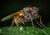 Best Exterminators in Columbus