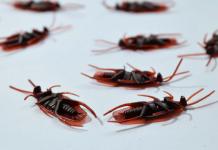 Best Pest Control Companies in Atlanta