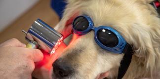 Best Pet Care Center in Albuquerque