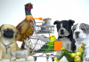 Best Pet Shops in Memphis