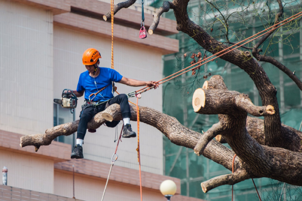 Best Tree Services in Fresno
