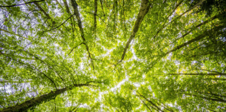 5 Best Tree Services in San Antonio