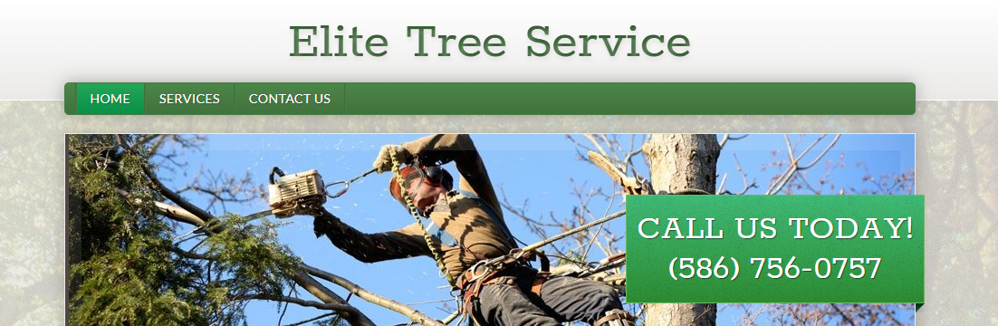 tall Best Tree Services in Detroit