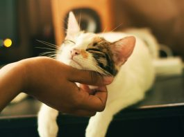 Best Pet Care Centers in Los Angeles, CA