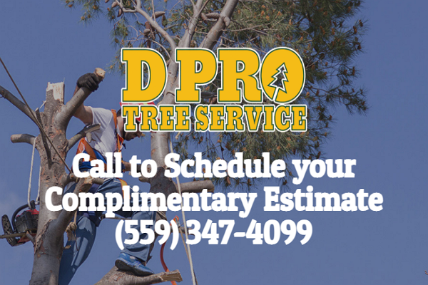 Top Tree Services in Fresno