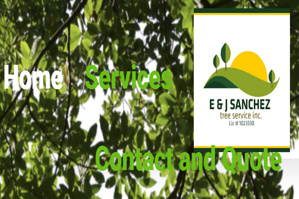 Tree Services in Fresno
