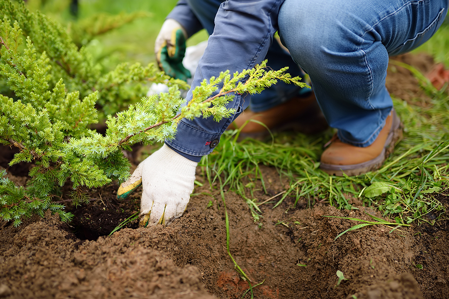 Landscaping - Increasing the Value of Your Property
