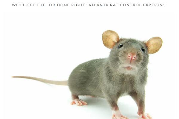 Pest Control Companies in Atlanta