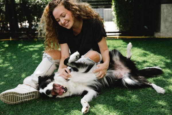 Pet care centre in Memphis