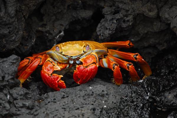 Top Seafood Restaurants in Mesa