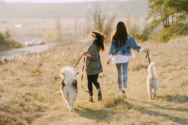 Dog Walkers in Tucson