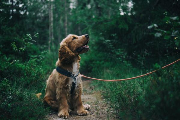 Dog Walker Tucson
