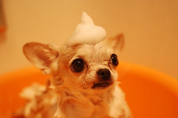 Dog Grooming Denver