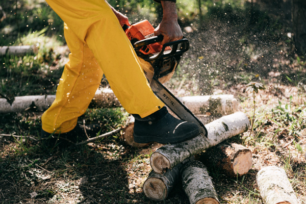 One of the best Tree Services in Oklahoma City