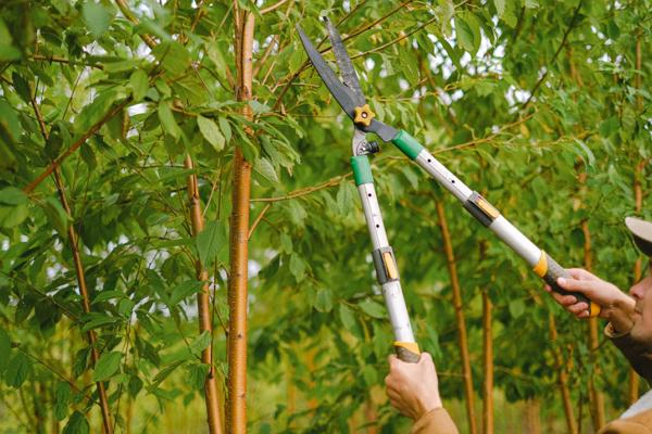 Good Tree Services in Oklahoma City
