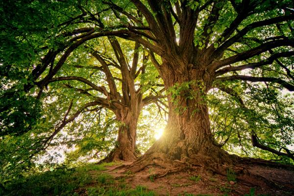 Tree Services Oklahoma City