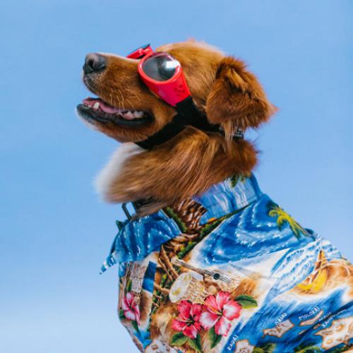 Dog Grooming Oklahoma City