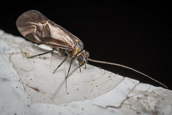 Top Pest Control Companies in Louisville