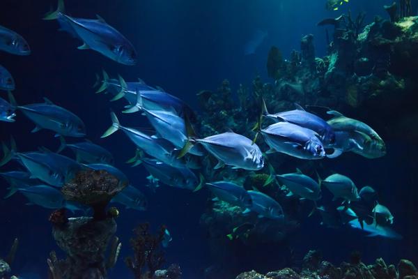 Aquariums/Zoos Baltimore