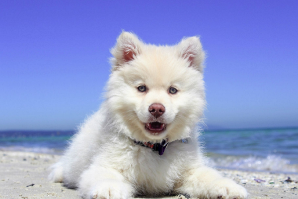 One of the best Doggy Day Care Centre in San Francisco