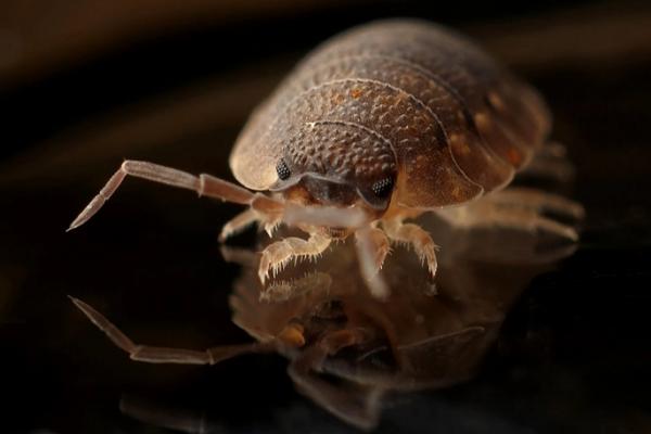 Top Exterminators in Columbus