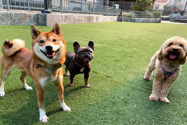 Good Doggy Day Care Centre in San Francisco