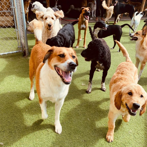 Good Doggy Day Care Centre in Denver