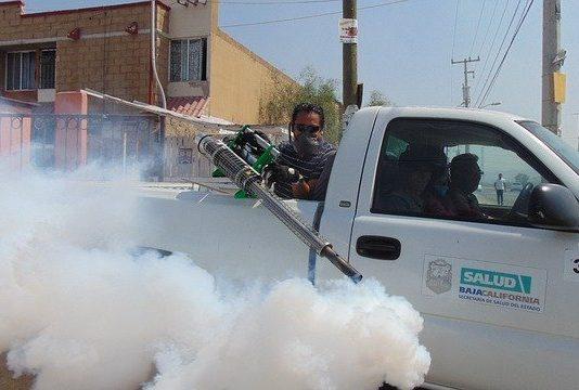 Best Pest Control Companies in Las Vegas