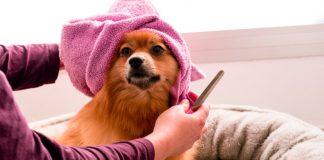 Best Doggy Day Care Centers in Atlanta, GA