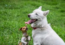 Best Doggy Day Care Centers in Fort Worth, TX