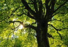 Best Arborists in Denver