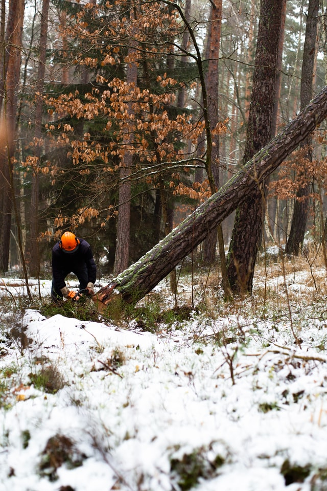 Best Tree Services in Detroit