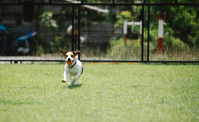 5 Best Doggy Daycare Centre in El Paso, TX