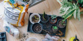 5 Best Gardeners in Dallas