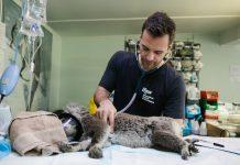 Best Veterinarians in Mesa, AZ