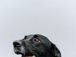 Best Doggy Day Care Centers in San Diego, CA