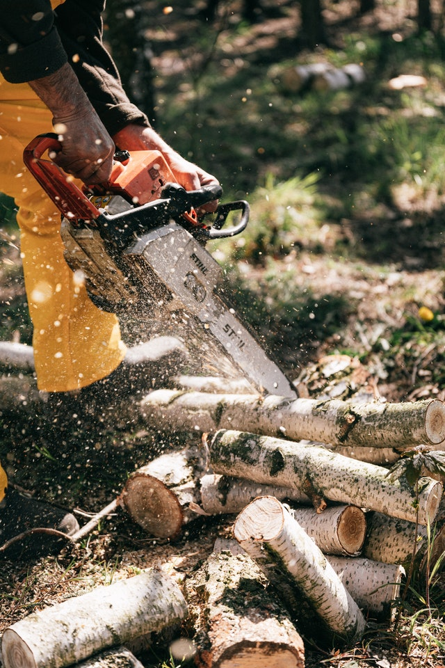 5 Best Tree Services in Louisville