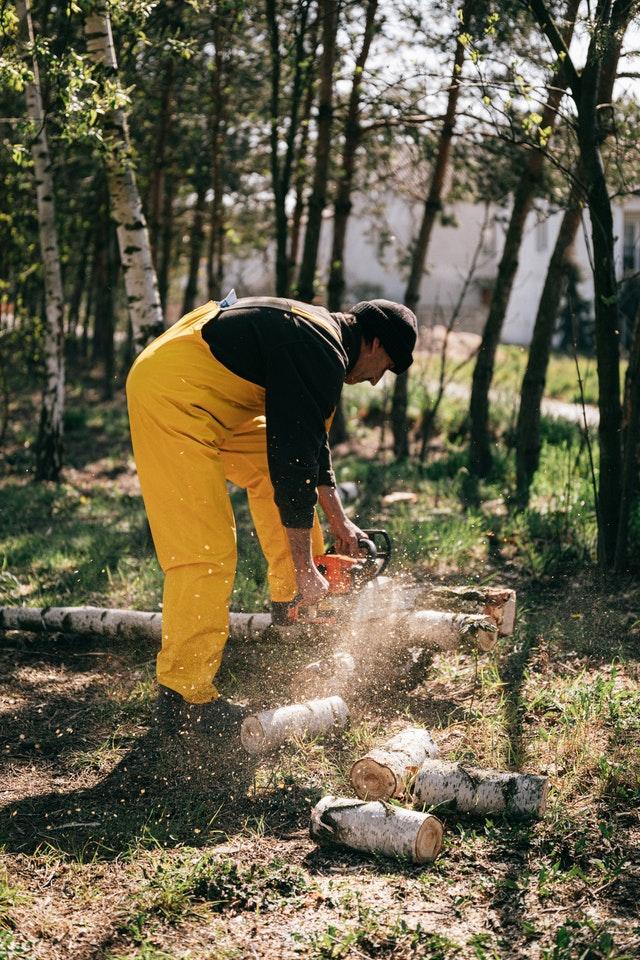 5 Best Arborists in Sacramento