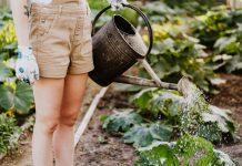 Best Gardeners in Louisville