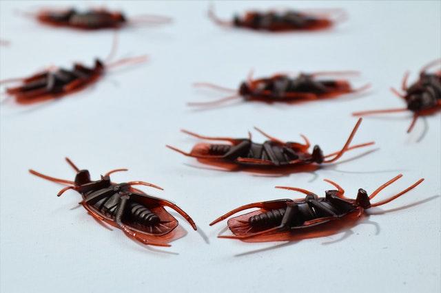 Best Exterminators in Mesa