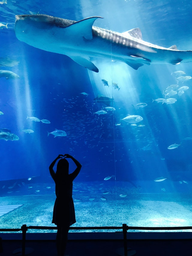 Aquariums and Zoos in Boston
