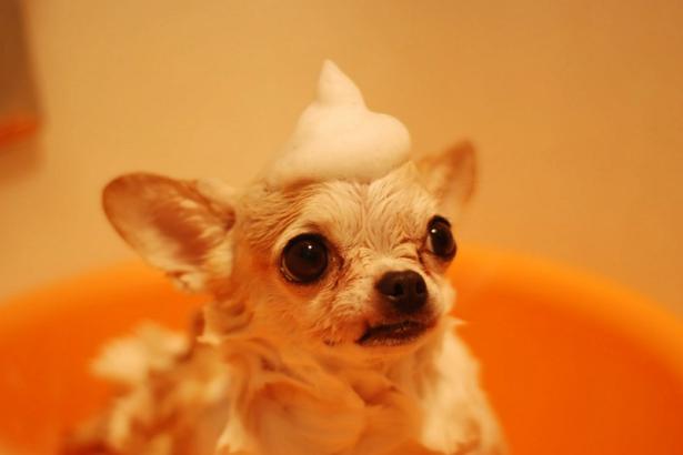 Best Dog Grooming in Atlanta
