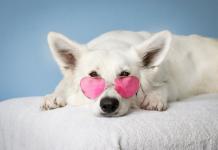 Best Dog Grooming in Washington