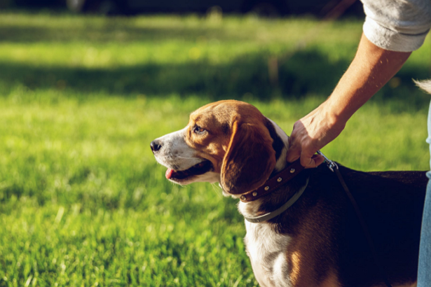 Best Doggy Day Care Centre in Sacramento