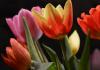 Best Florists in Memphis