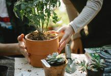 5 Best Gardeners in El Paso, TX