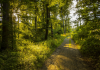 Best Hiking Trails in Columbus