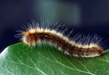 Best Pest Control Companies in Portland