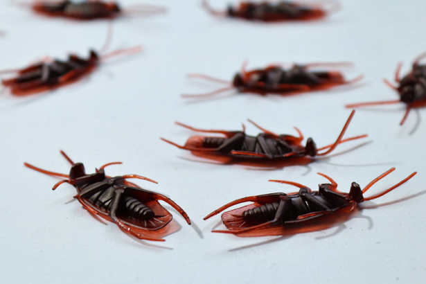 Best Pest Control Companies in St. Louis